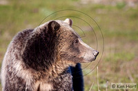 Grizzly KHD029471