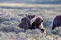 Grizzly KHD029514