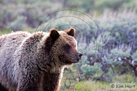 Grizzly KHD029564