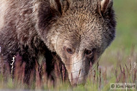 Grizzly KHD029645